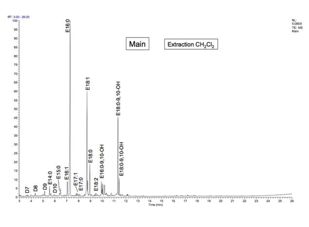 Chromatogramme, obtenu en GC/MS, de l'échantillon prélevé sur la main momifiée.